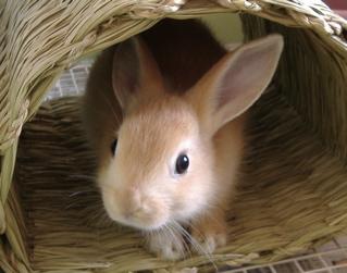 探偵ナイトスクープ ウサギの飼主に怒りを感じました。